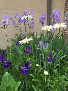 dport gardening 3